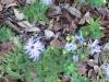 lady-bird-johnson-wildflower-center03