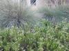 lady-bird-johnson-wildflower-center07