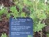 lady-bird-johnson-wildflower-center08