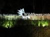 lady-bird-johnson-wildflower-center16