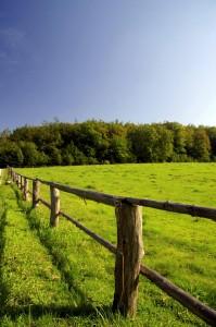 organic ranch
