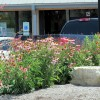 Native Plants thrive in Summer
