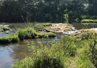 creek in April 2020