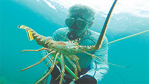 Sun Sentinel outdoors writer Steve Waters snags a Florida Spiny lobster on July 29 during the opening day of lobster mini-season off the coast of Lauderdale-by-the-Sea.(JOE CAVERETTA/SUN SENTINEL/TNS)