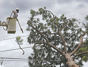 Workers from JAFLO Tree Service in West Virginia cut up a massive pine tree that fell on high-voltage power lines during Hurricane Matthew, along Beville Road on Oct. 10 in Daytona Beach.(JOE BURBANK/ORLANDO SENTINEL/TNS)