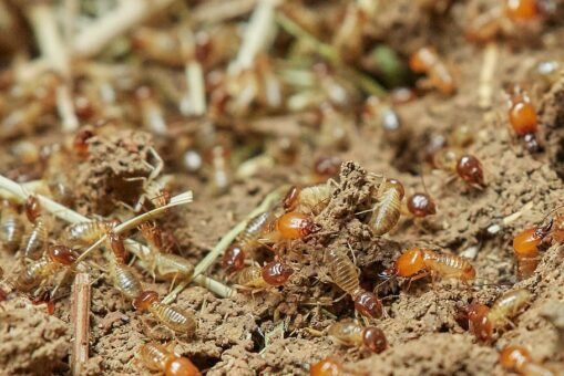 termites-nature-food-insect