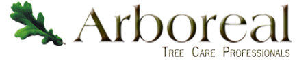tree care arborist blue mountain ontario