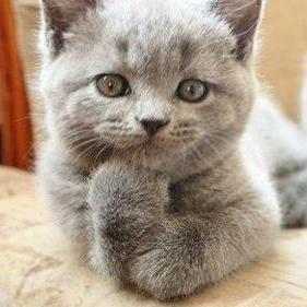 consider-cat