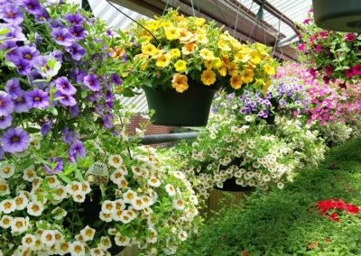 Marys Greenhouse