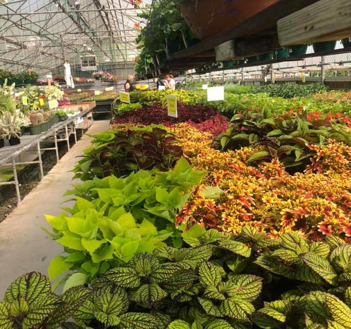 Greenhouse and Nursery