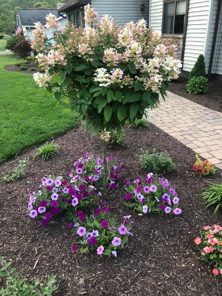 Landscaping Flowers & Plants