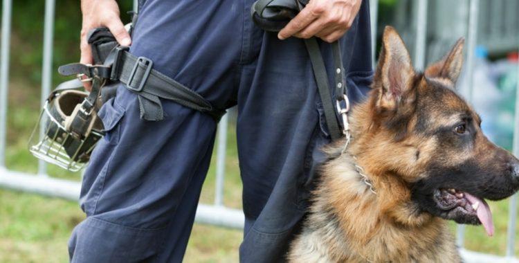 Police dog saves partner's life after ambush attack in Mississippi woods