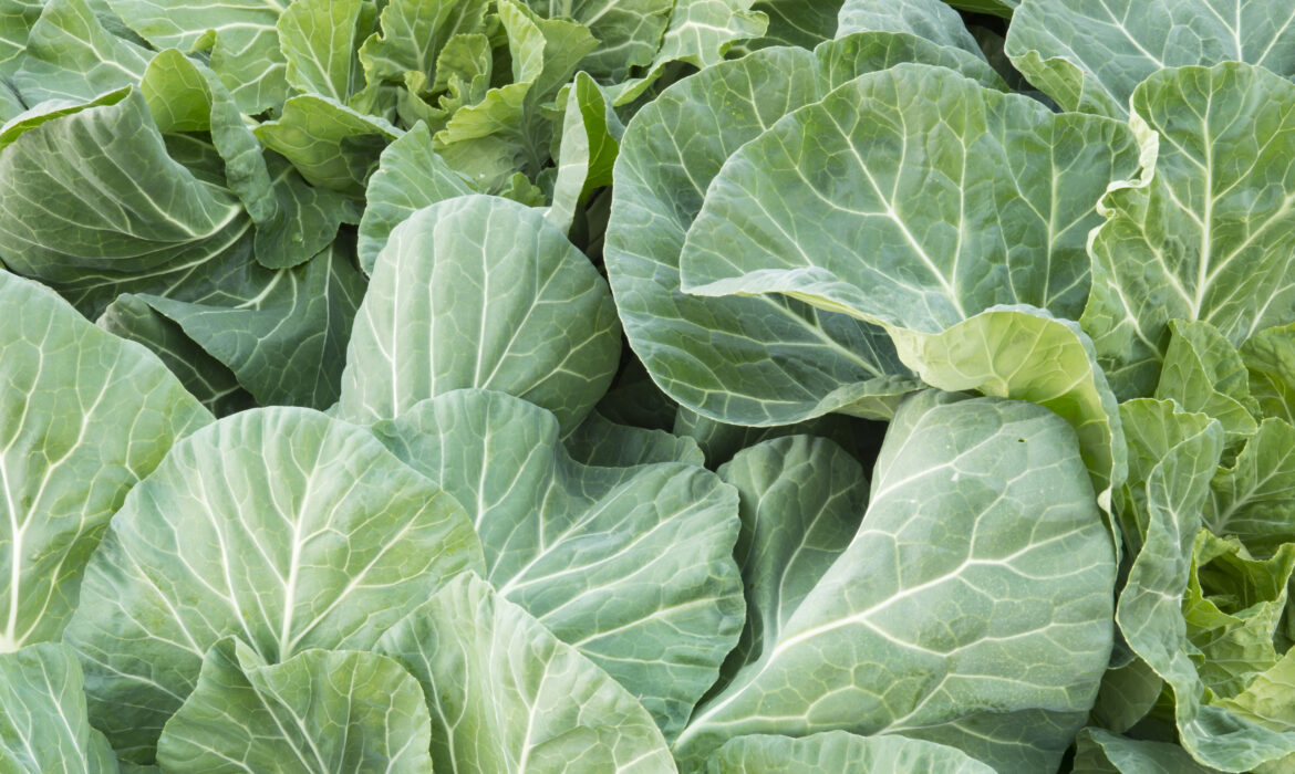 Get More Nutrition from Your Collards