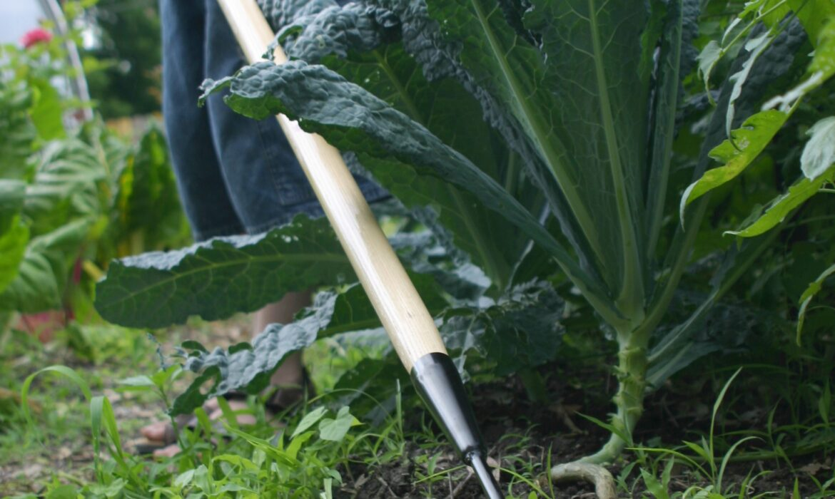 Investing in the Right Tools, Gadgets, Equipment, Accessories Will Keep You Gardening Forever