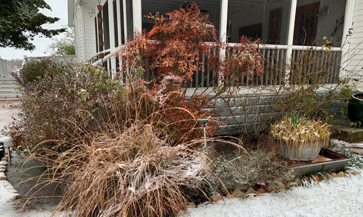 How to Recover Your Garden After the Freeze