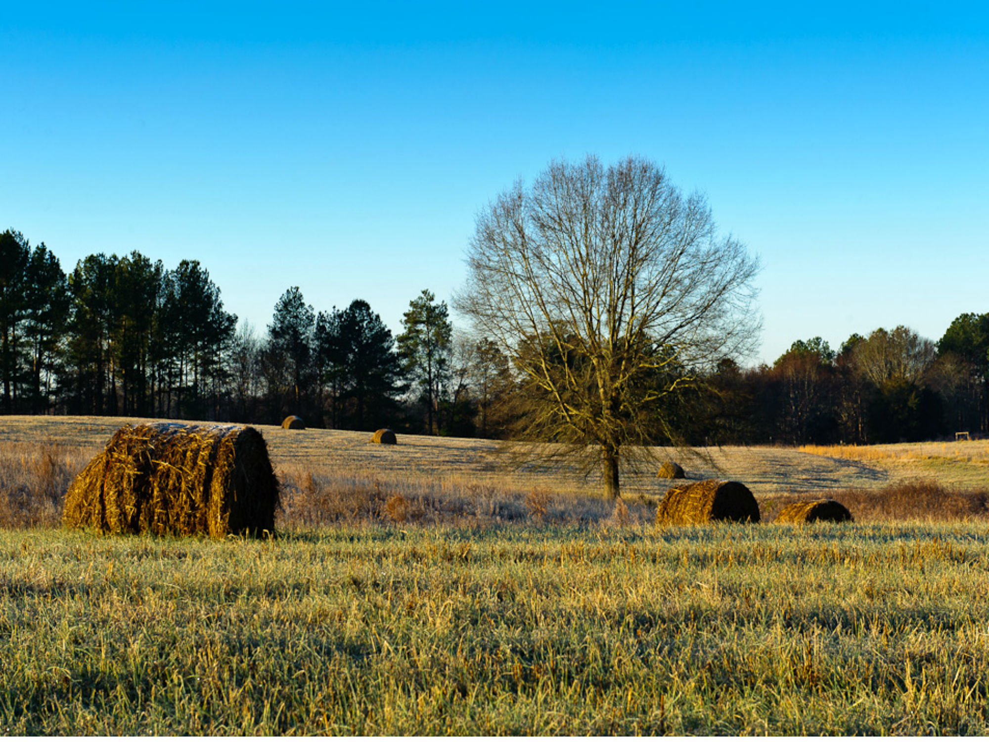 Hayfield with a treeline in the background and hay bails