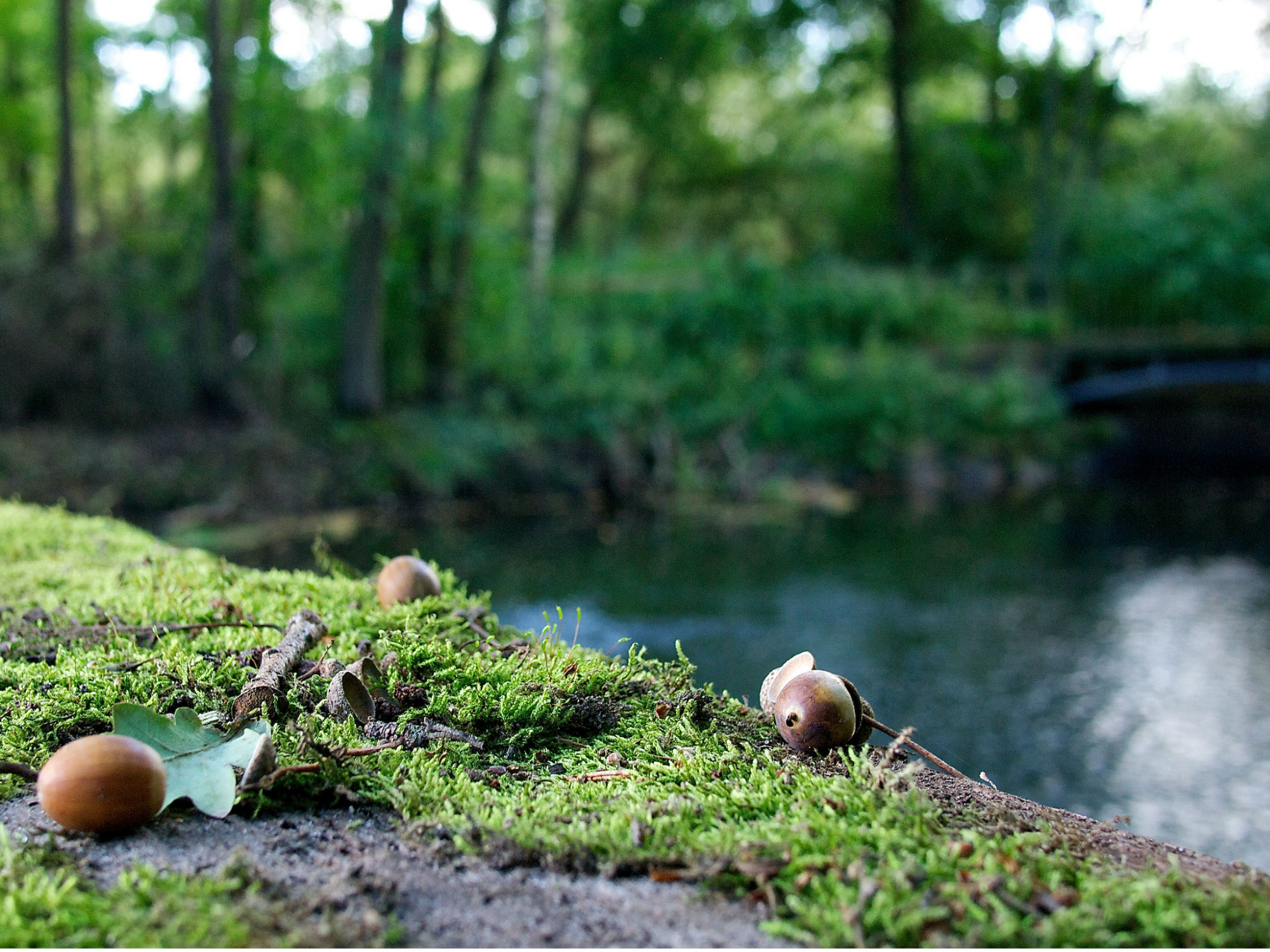 photo by andre hofmeister of acorn, moss, and creek