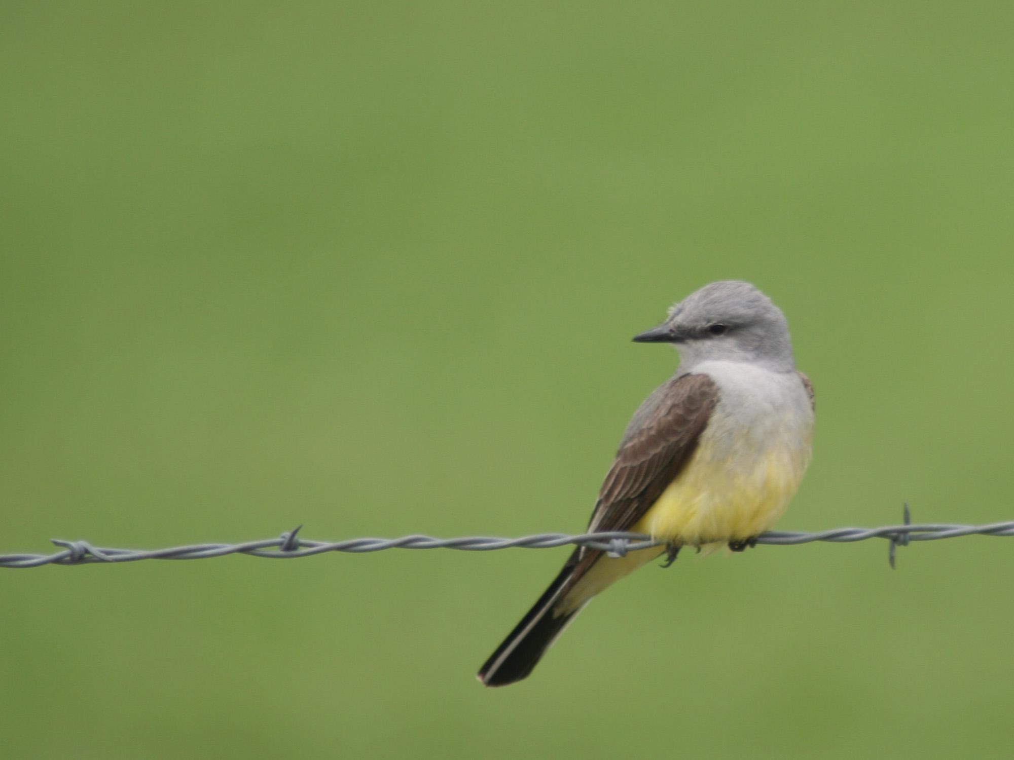 photo of little bird on a fence wire