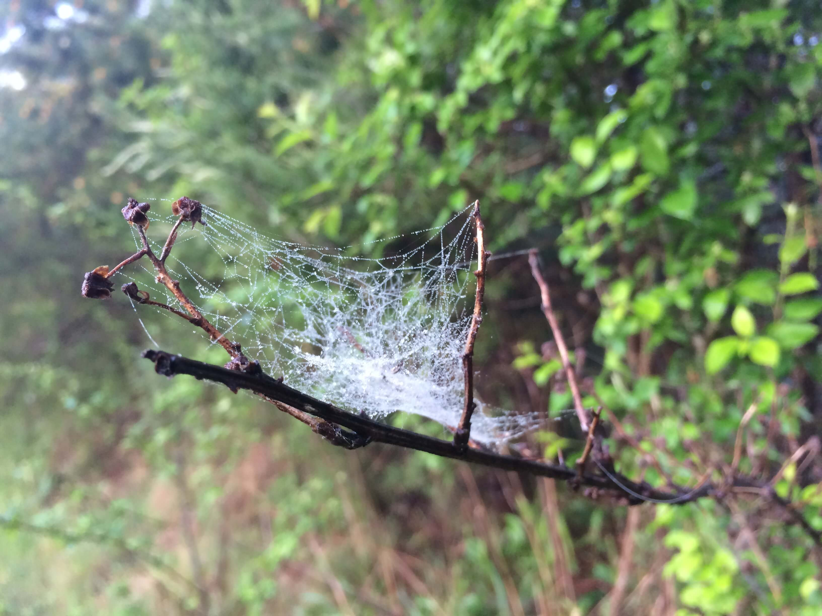 dew on a spider's web