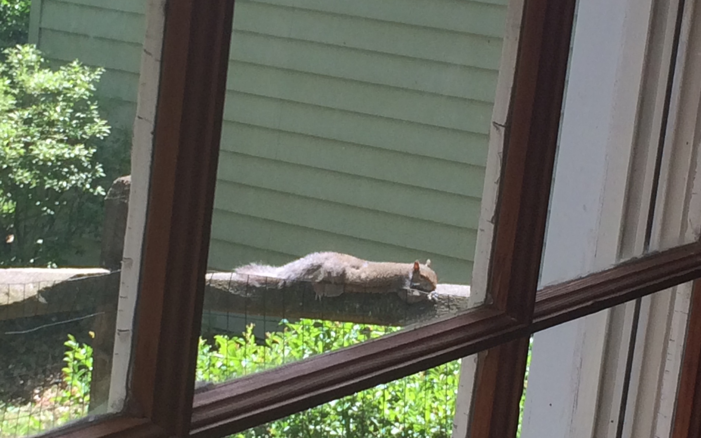 squirrel relaxing on a fence post