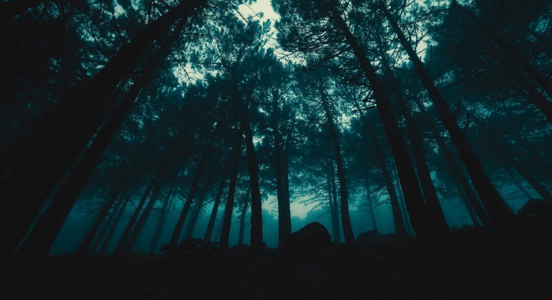 fear of a dark forest