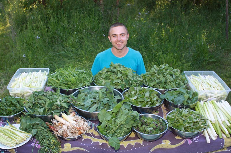 Simple Rules For Foraging Wild Edibles
