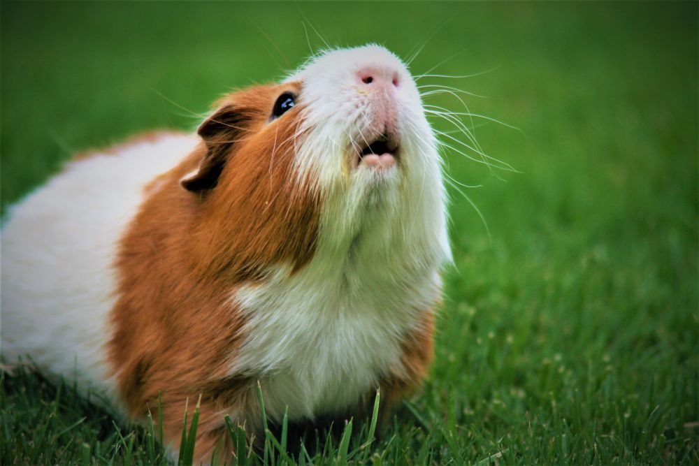 Best Small Pets That are Easy to Take Care For Travellers