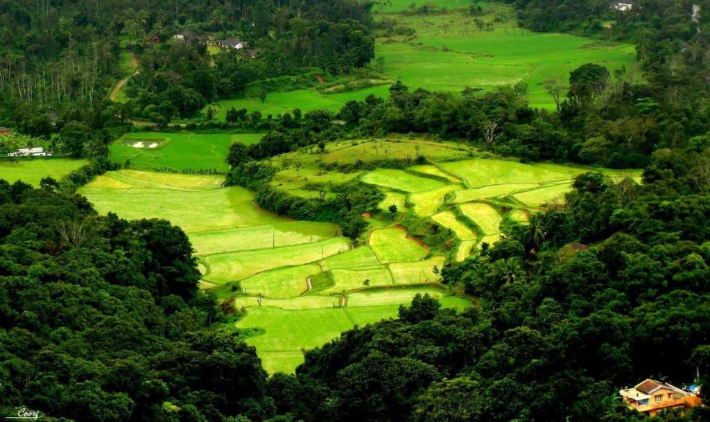 Coorg in summer
