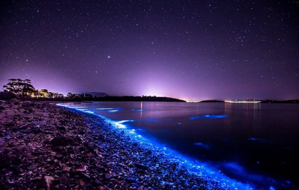 Bioluminescent Beach