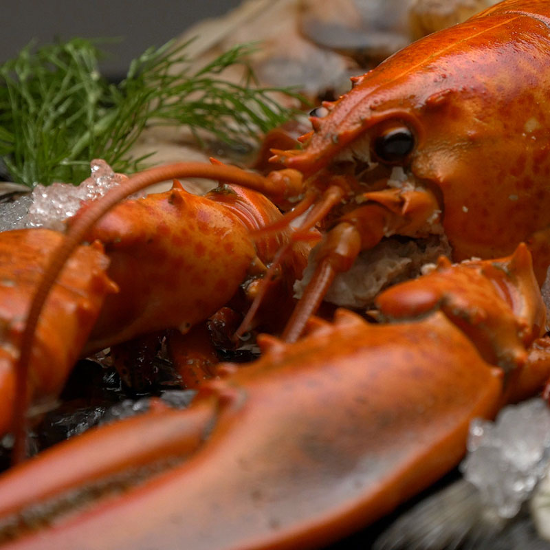 Saltwater Seafood, Shop With The Doc, photo of lobster