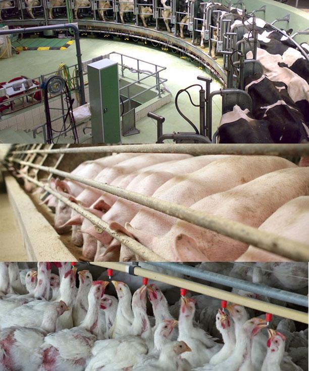 Friesen Nutrition farm Bioxy