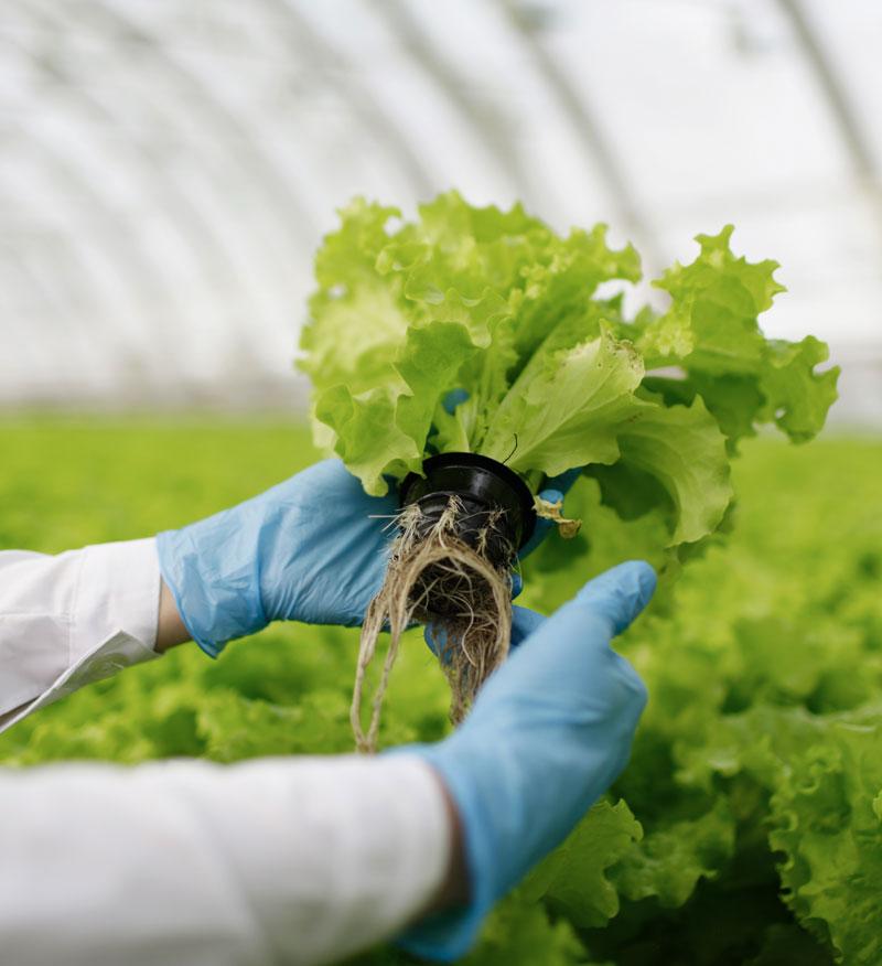 Friesen Nutrition Crop sciences plant