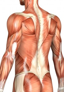 Muscles must be properly rehabilitated for permanenst posture correction.