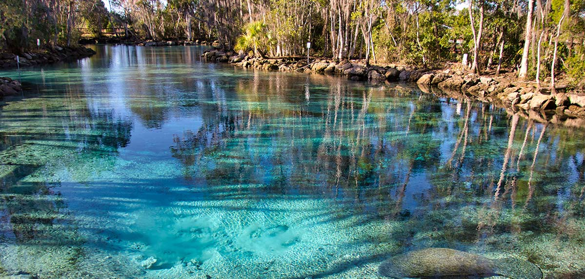 Clear blue spring fed water in Citrus County's Crystal River