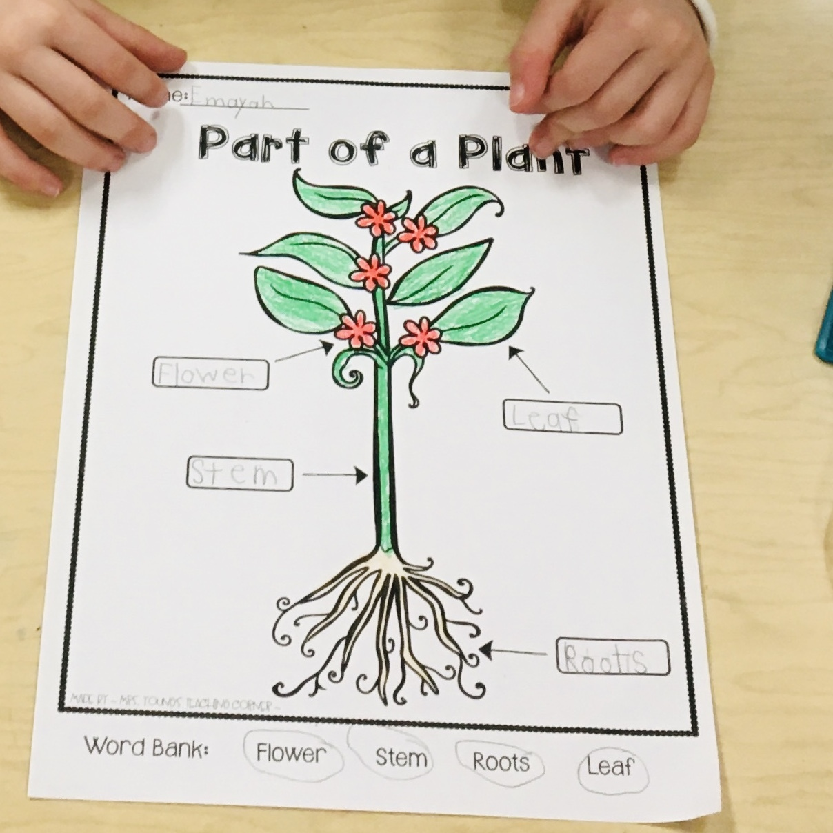 Kindergarten Science Labeling Parts of a plant