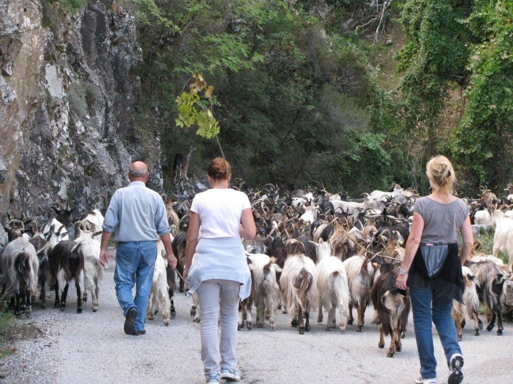 Corsica - local residents
