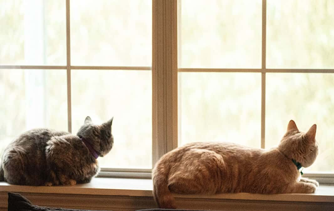 Cats on a windowsill