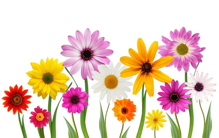 free_flowers_shutterstock_13325443_web