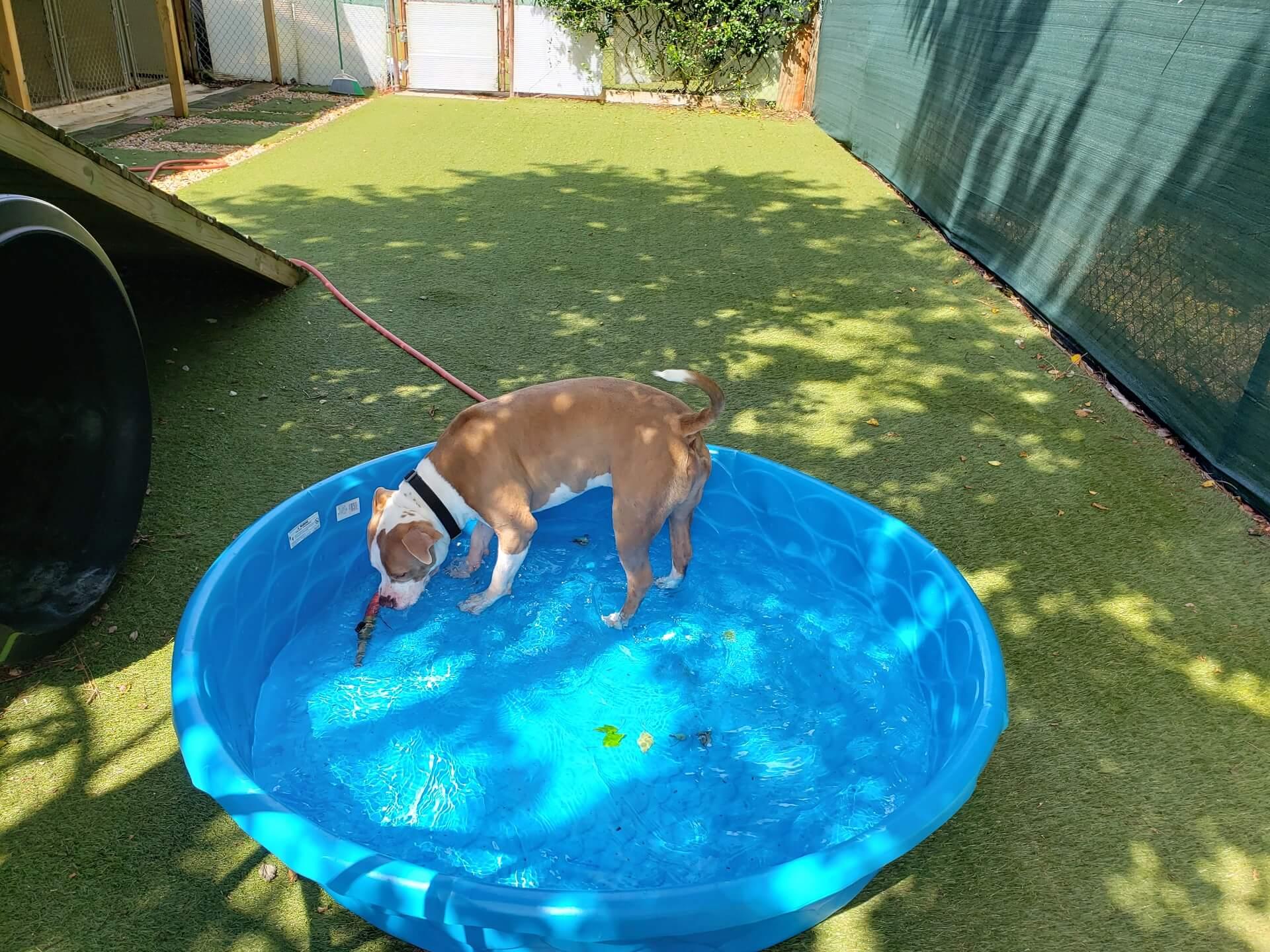 dog-kennels-santa-rosa-beach-fl