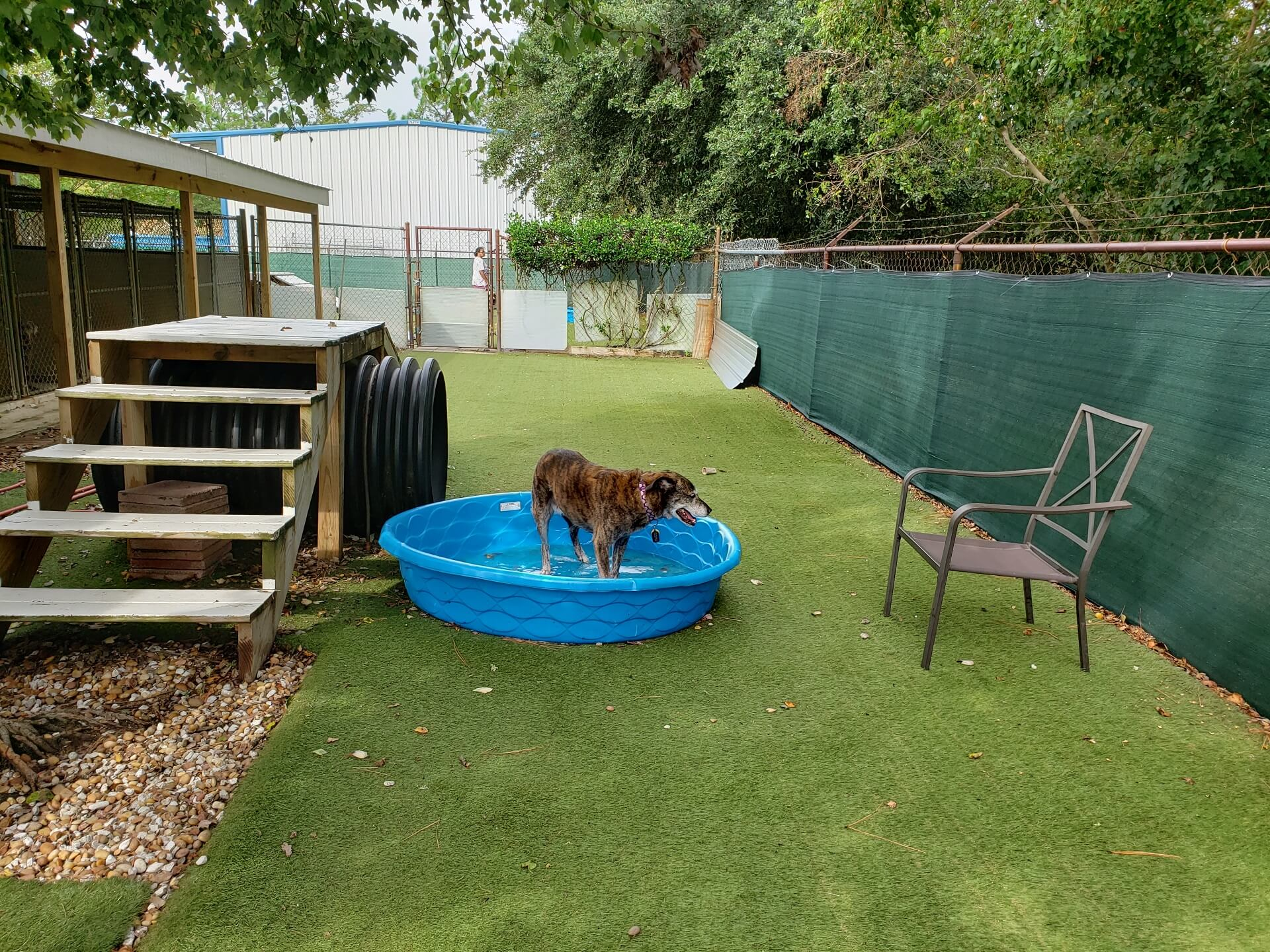 doggy-day-care-30a