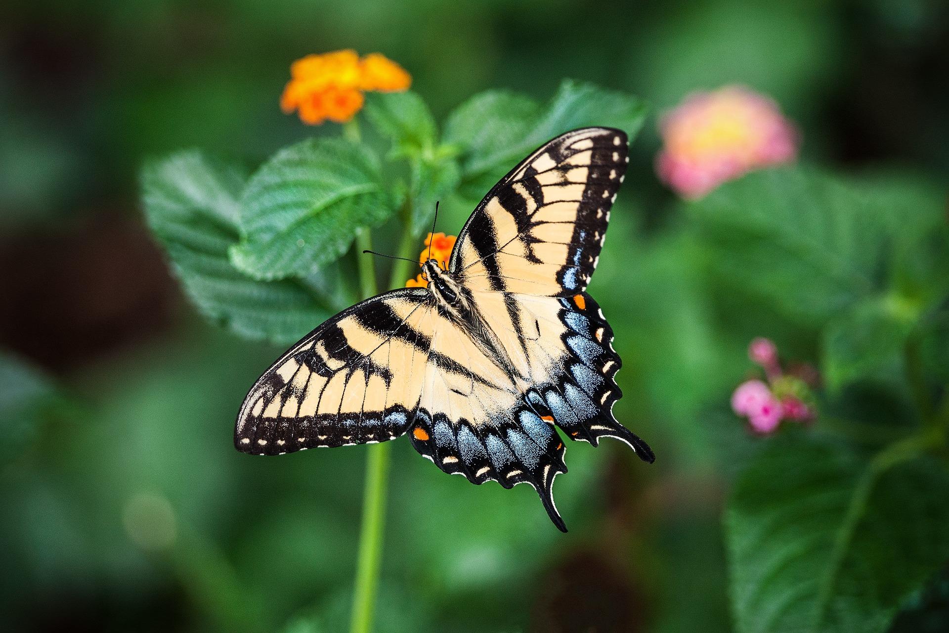 butterfly-1391809_1920