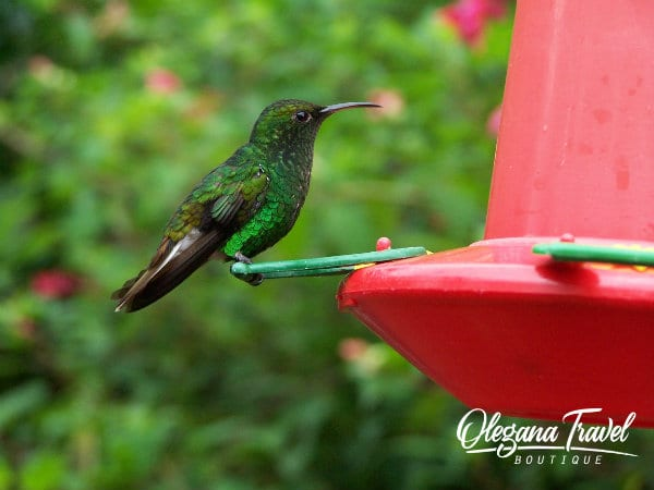 top 10 facts about costa rica - Hummingbird