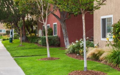 Enjoy Our Eco-Friendly Apartments at The Evergreens
