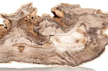 The science behind Petrified Wood. Image Credit: Heritage Auctions.