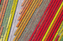 Amazing photos at Drone Awards 2018 - Mention of abstract image: Flowers, Franco Cappellari - Texture, 2018.