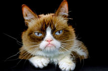 """The Grumpy Cat was a true internet diva that inspired thousands of """"memes"""" and also comics, movies, clothes and perfumes, died of complications of a urinary infection, as announced on Friday in social networks his """"dismayed"""" family. / AP Associated Press, 2019."""