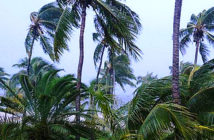 Hurricane Dorian rose to category 5 and moves north of the Bahamas.Palm trees facing the wind that accompanies the arrival of Hurricane Dorian in Marsh Harbor, Great Abaco Island, Bahamas Image Credit: Dante Carrer / Reuters, 2019.