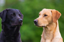 Dogs reach middle age in just two years. Scientists find we've been calculating dog years all wrong. They grow up fast. Image Credit: Alamy / Getty Images, 2019.