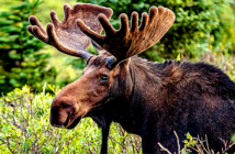 America's most epic unsung road trip. Into the wild: an early moose encounter. Image Credit: Matt Dirksen / Getty Images, 2019.
