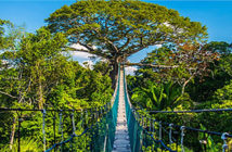 Seven worlds, one planet - Jeremy Lazell heads to Peru in search of macaws, jaguars, howler monkeys — and cocktails. Treetop billing: a canopy walkway in the Tambopata reserve. Image Credit:  Getty Images, 2019.